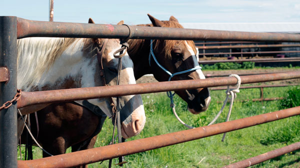 Horses at Stampede Ranch