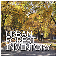 urban forest inventory